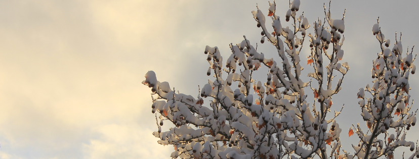 Snow tree 2016dec25 facebook header.png