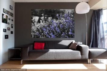 Lavender and Black