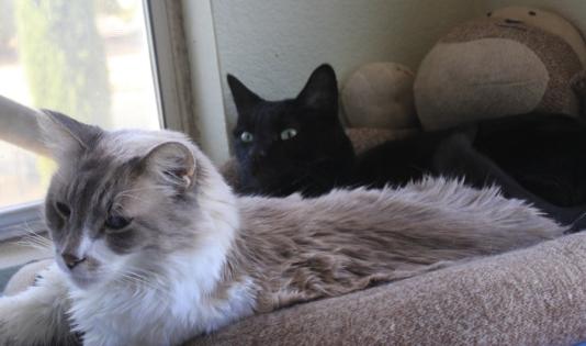 Cats Likken