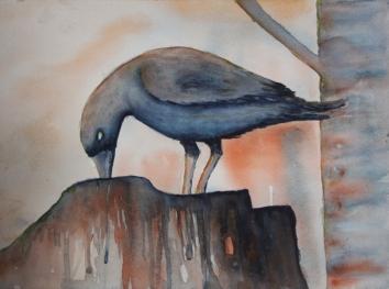 Crow on an old log